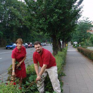 Die SPD fordert Nachpflanzungen von Japanischen Kirschbäumen auf der St. Rochus-Straße in Kaster
